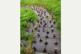 Gnome on the Range